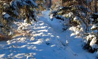 Masowa wycinka świerków na Kopie – winny kornik i klimat