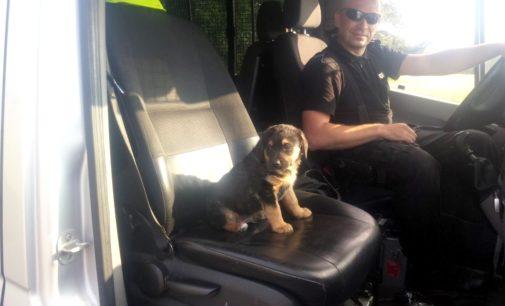 Uratowany szczeniak znalazł dom u policjanta