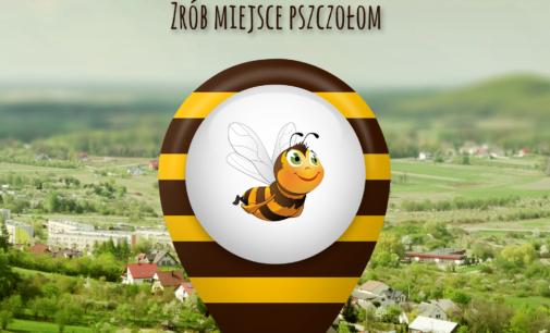 Zrób miejsce pszczołom – pod tym hasłem rusza wielka akcja dla społeczności lokalnych