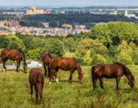 ANR o sprawie sprzedaży koni w prudnickiej stadninie