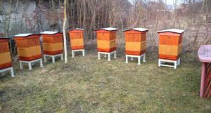 Złodzieje ukradli 28 uli z głubczyckich pasiek