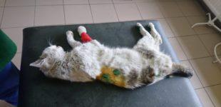 Strzelali do kota. Bestialstwo w Głuchołazach