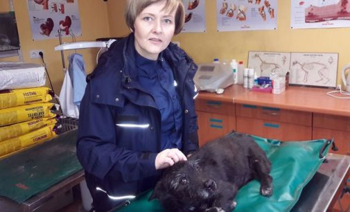 Pomogła potrąconemu psu
