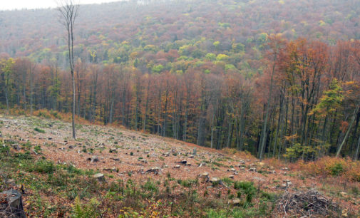Duże straty w lasach po jesiennych wichurach