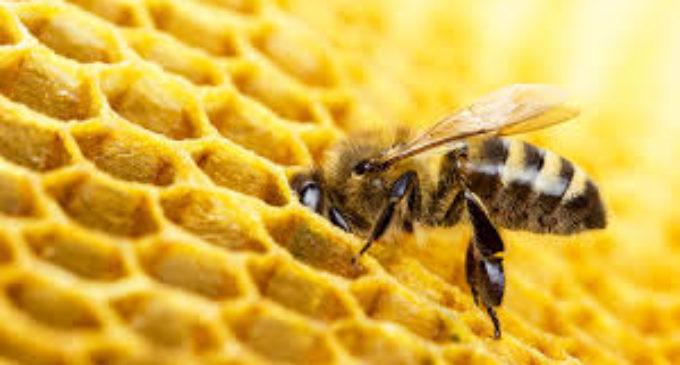 Ktoś wytruł pszczoły. Jest nagroda za wskazanie sprawcy
