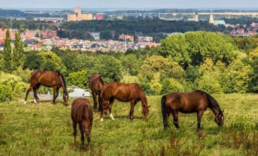 Dyskusyjna sprzedaż koni z prudnickiej stadniny?