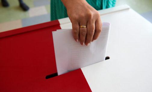 Wybory – co w trawie piszczy?