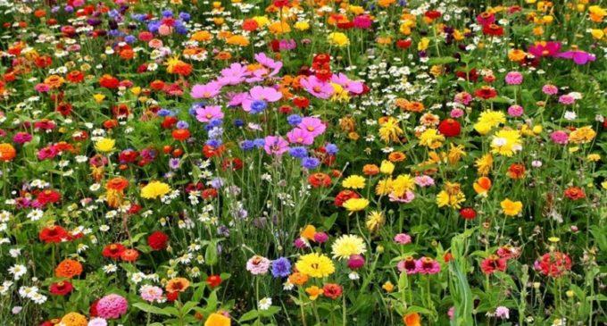 Kwietna łąka będzie atrakcją Moszczanki